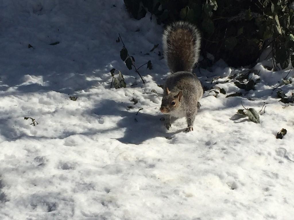 Micro-momentos por Central Park marzo 2015